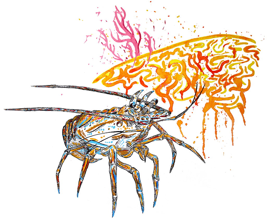Caribbean, spiny, lobster, coral, reef, fishing, painting, art
